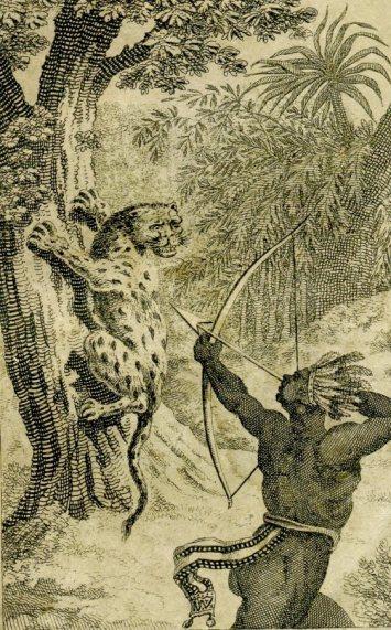 Guyana Denis 1824 tijger