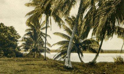 plantage Coronie