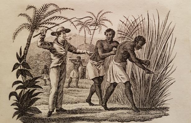 suikerriet tony en eduard