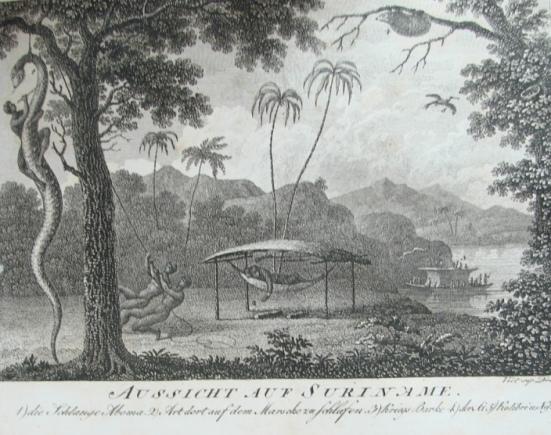 Stedman in Taschenbuch der Reisen EAW Zimmermann 1806